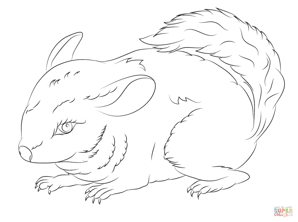 1024x764 Cute Long Tailed Chinchilla Download For Coloring Pages