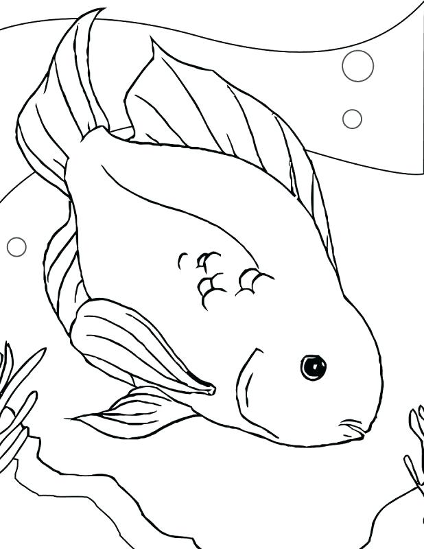 618x800 Ferret Coloring Pages Chinchilla Coloring Page Ferret Coloring