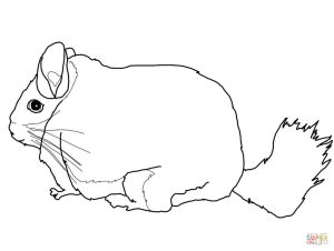 300x226 Long Tailed Chinchilla Download For Coloring Page