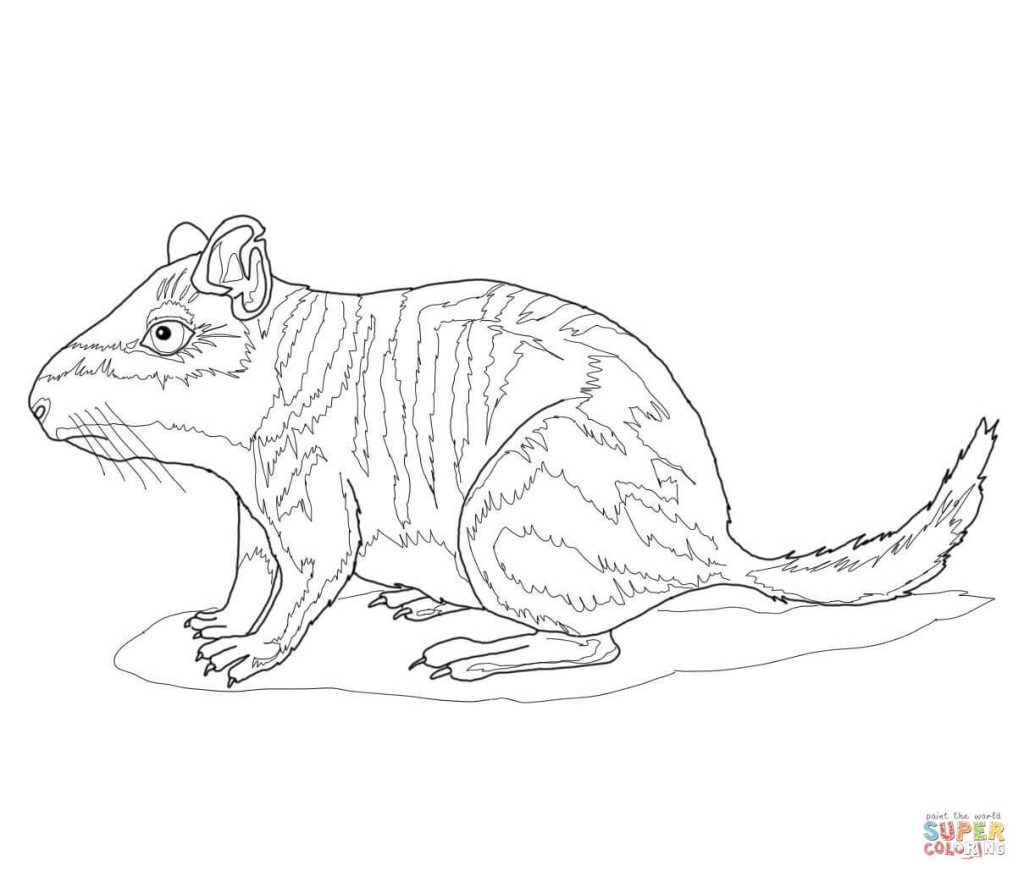 1024x877 Plains Download For Viscacha Coloring Page