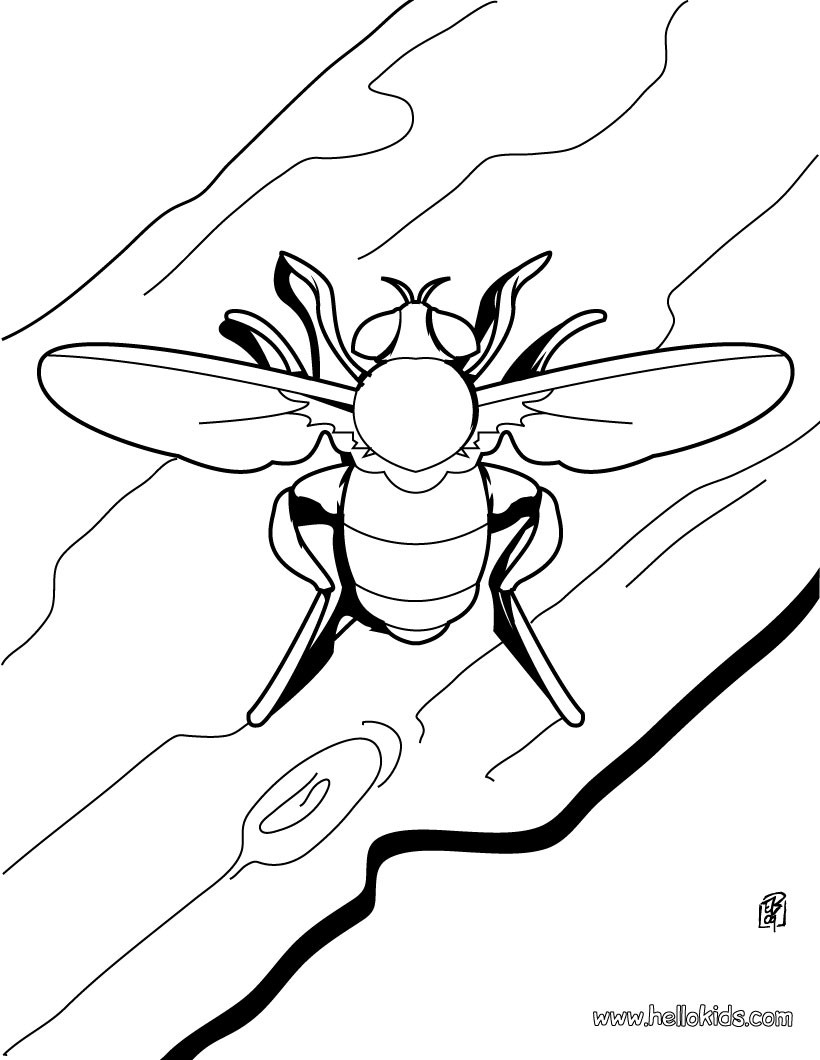 820x1060 Small Animal Coloring Pages