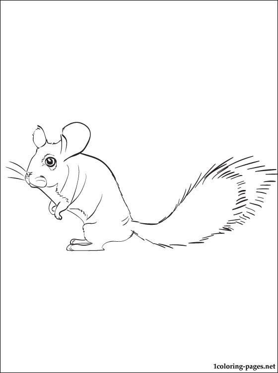 560x750 Chinchilla Coloring Book Stories Coloring Pages
