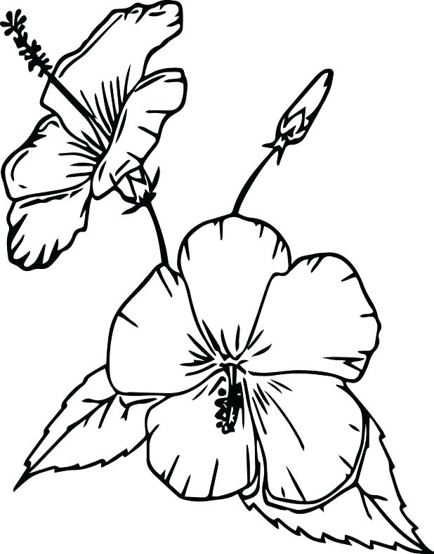 618x789 Coloring Pictures Of Flowers In A Vase Flower Vase Coloring Page