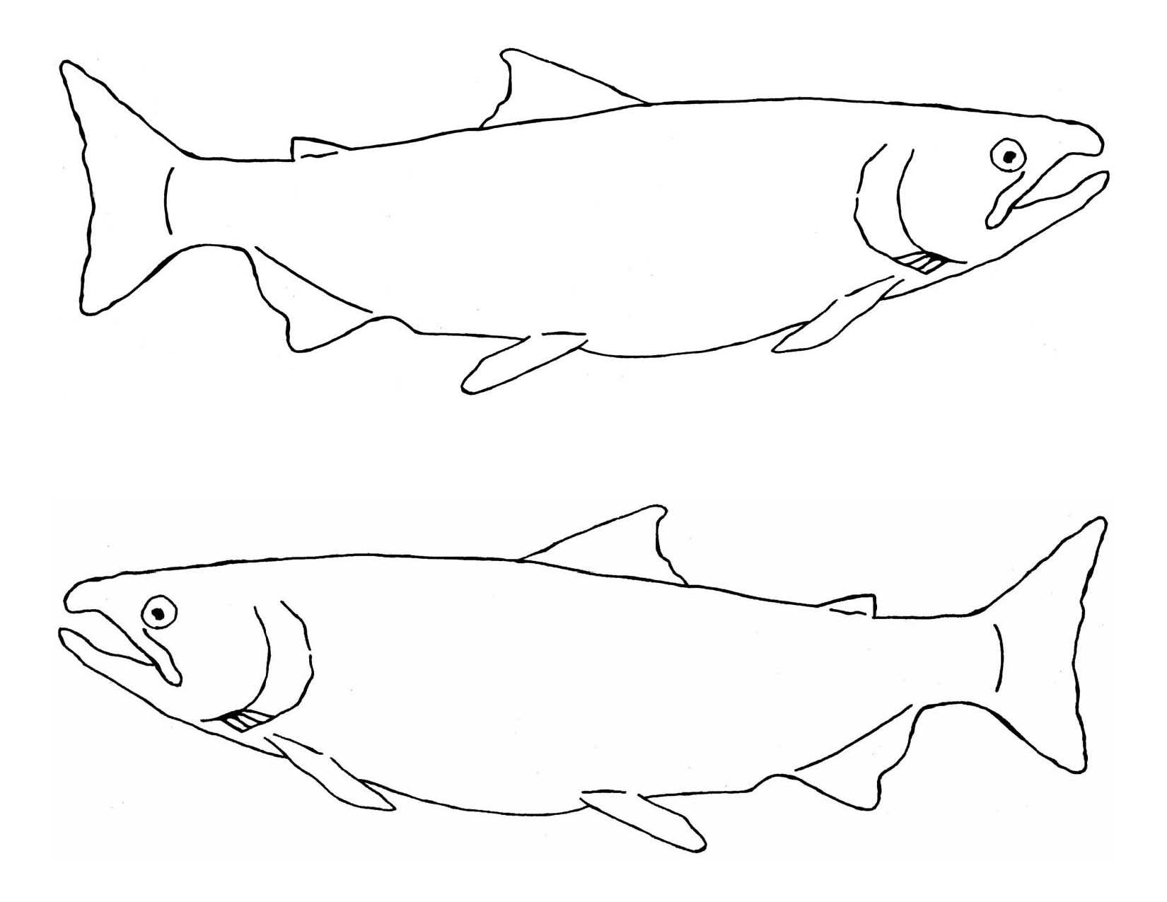 1650x1275 Free Chinook Salmon Coloring Page Drawing At Getdrawings Com
