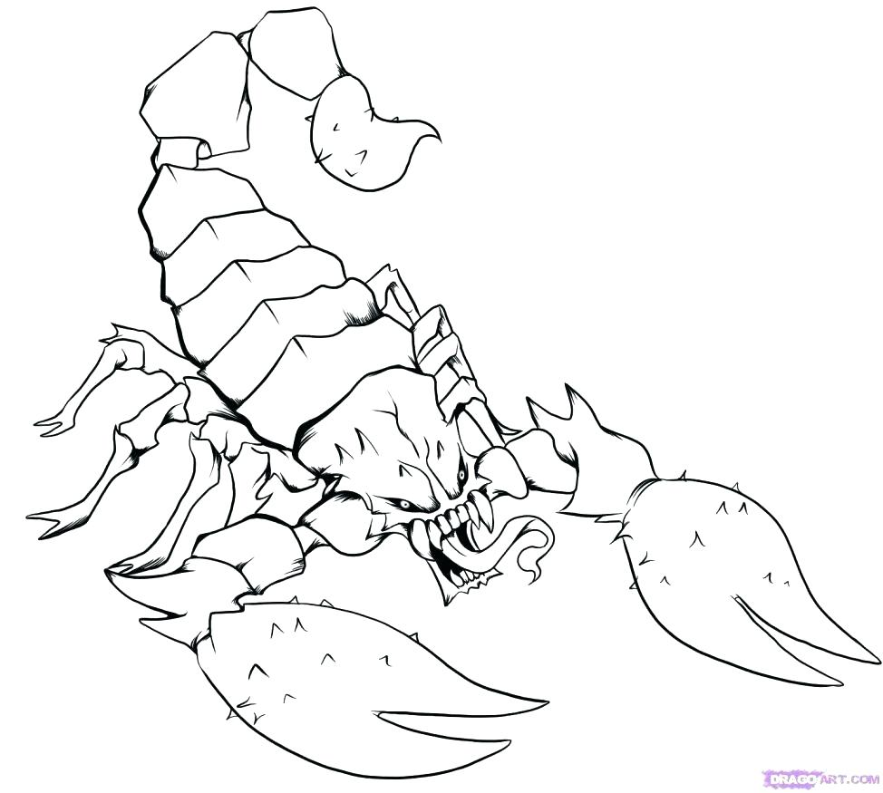 974x875 Attractive Chinook Salmon Coloring Page Drawing At Getdrawings Com