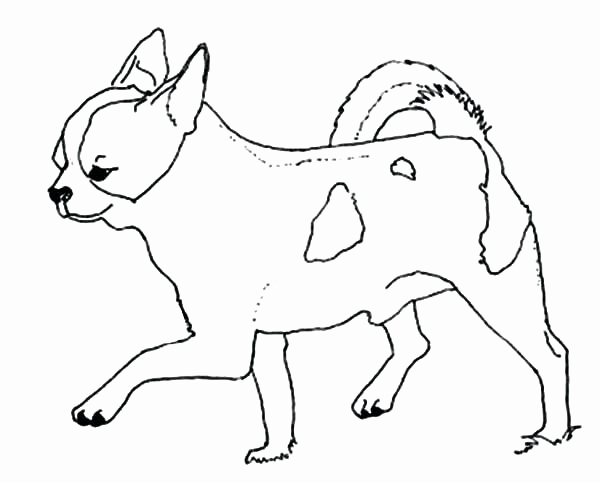 600x483 Teacup Chihuahua Coloring Pages Collection Chihuahua Coloring Page
