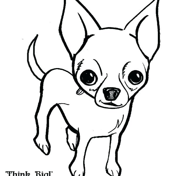 600x600 Teacup Chihuahua Coloring Pages Chihuahua Coloring Page Hills