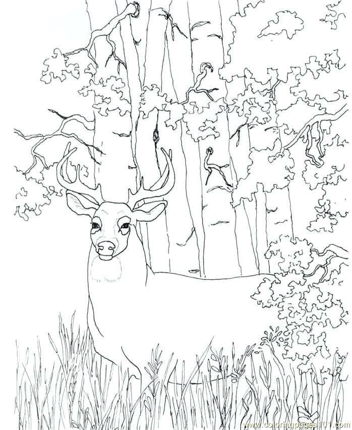 698x852 Coloring Pages Free Coloring Pages Red Deer John Deere Printable