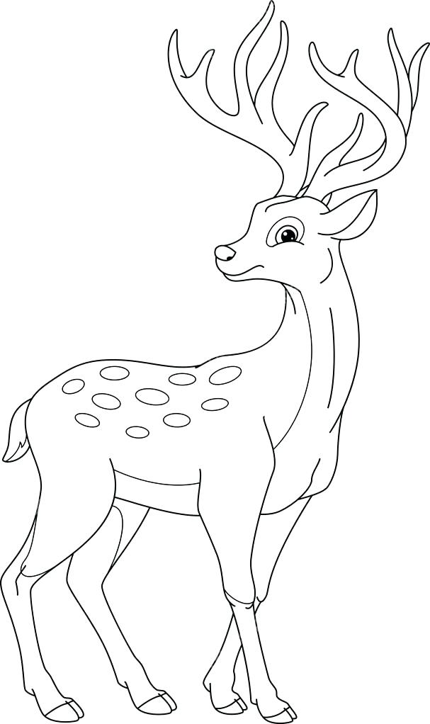 607x1022 Deer Coloring Page Deer Coloring Page Pages Free Deer Head