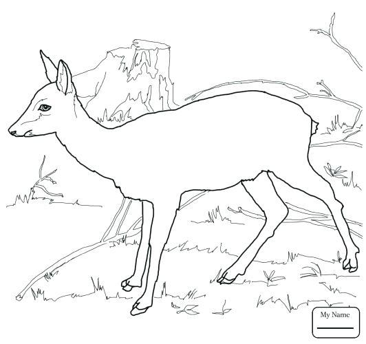 532x500 Deer Coloring Page Deer Head Outline Printable Sketch Coloring