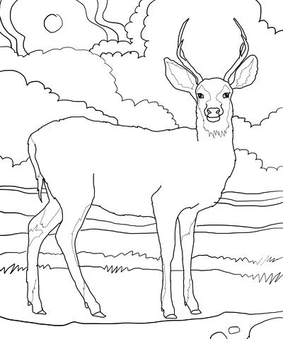 400x480 Deer Coloring Page Insider Deer Pictures To Print Coloring Page