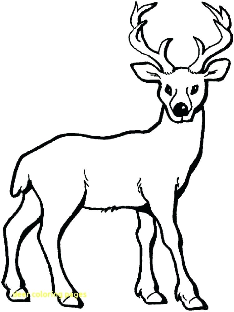 750x1000 Deer Coloring Pages Printable Family Deer Coloring Pages White