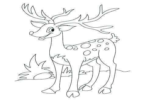 476x333 White Tailed Deer Coloring Page Deer Coloring Pages Whitetail Deer
