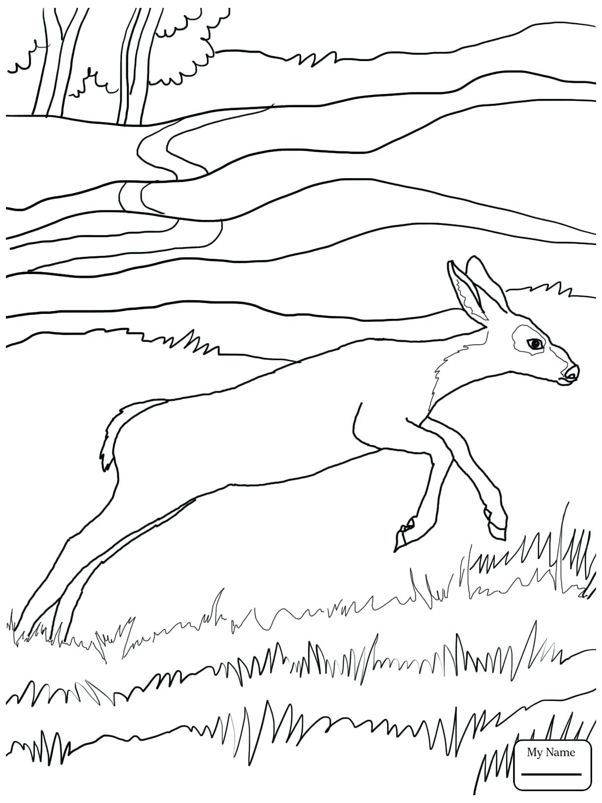 1224x1632 Coloring Pages Deer Coloring Page Floral Adult Baby Pages Deer