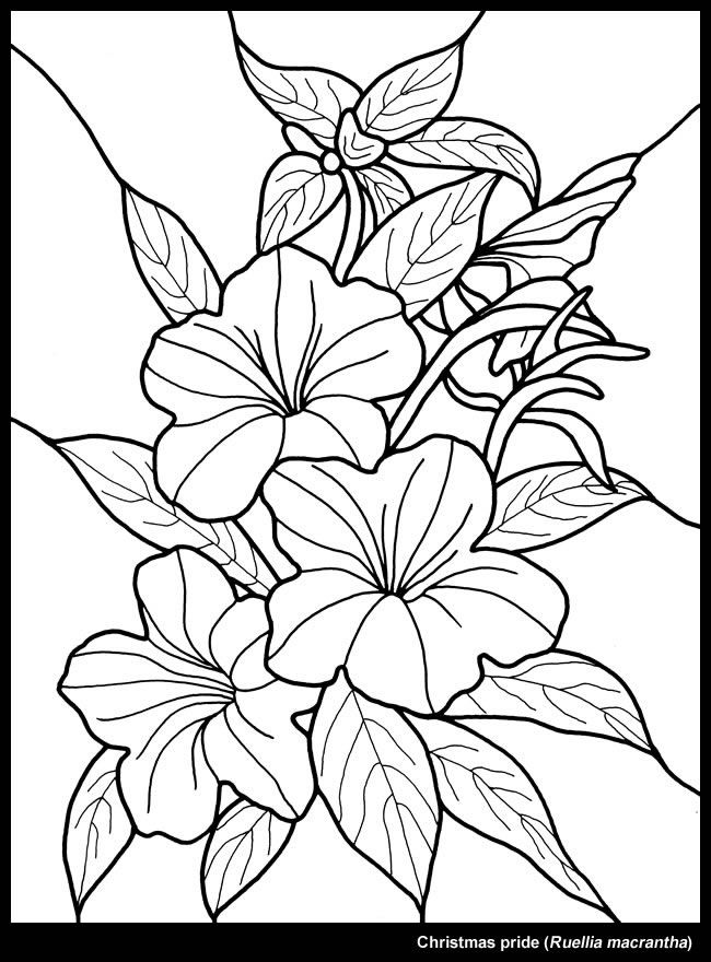 650x880 Christmas Flower Dover Publications Stained Glass