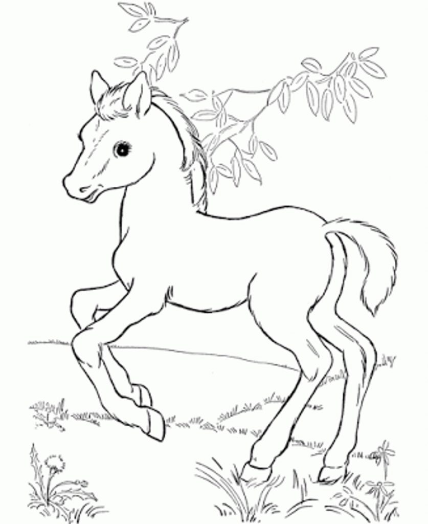 837x1024 Staggering Coloring Pages Of Horses Printable Detailed Horse