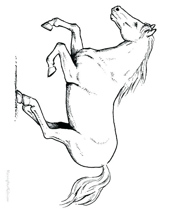 564x690 Unicorn Coloring Pages Printable Sheets Pin The Tail On Horse Game