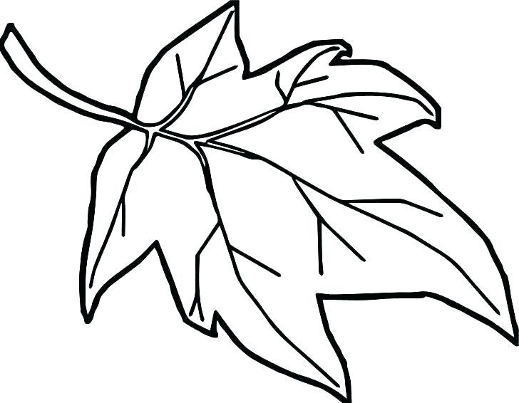 728x566 Christmas Holly Coloring Pages