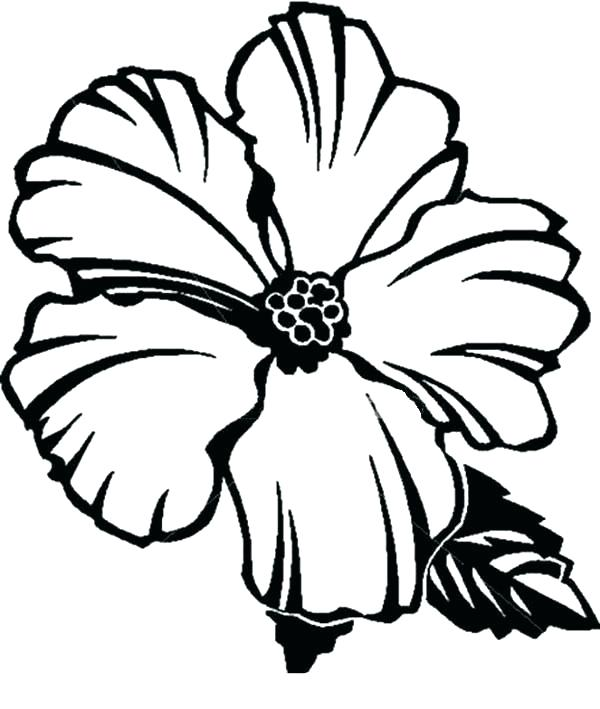 600x709 Mistletoe Coloring Pages Hibiscus Flower Coloring Pages Mistletoe
