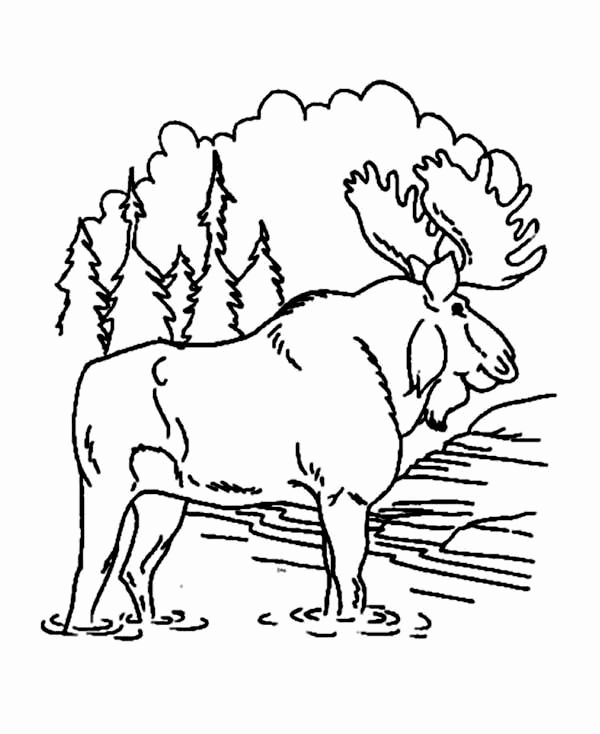 Christmas Moose Coloring Pages