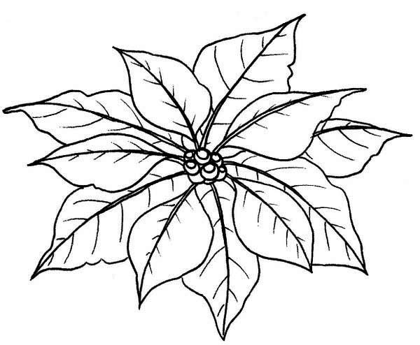 600x494 Couple Of Poinsettia Flower Leaves Coloring Page
