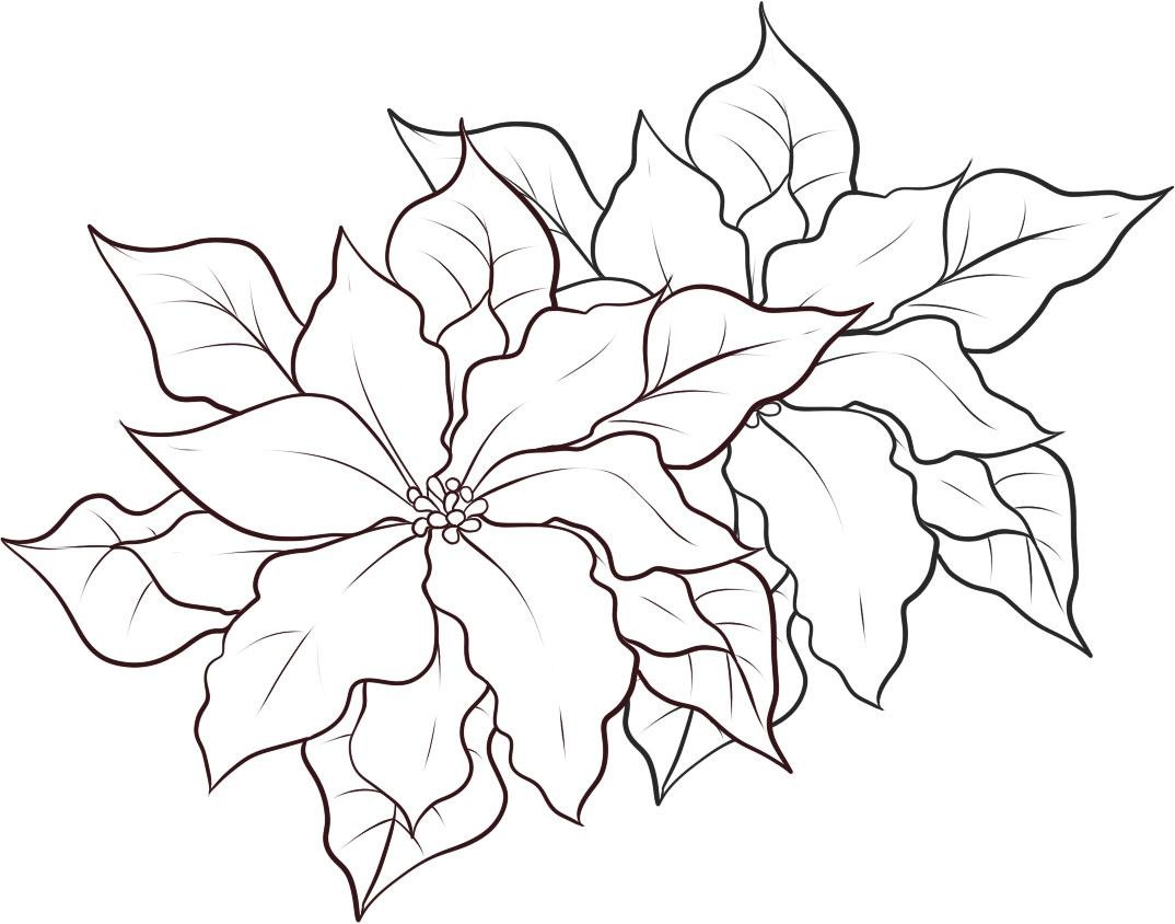 1074x844 Free Printable Poinsettia Coloring Pages For Kids