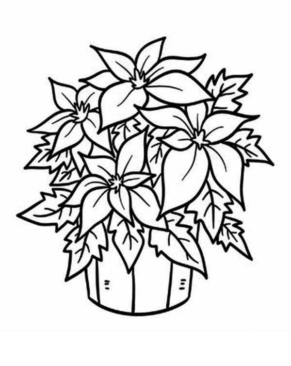 600x754 Fresh Poinsettia Flower In A Bucket Coloring Page