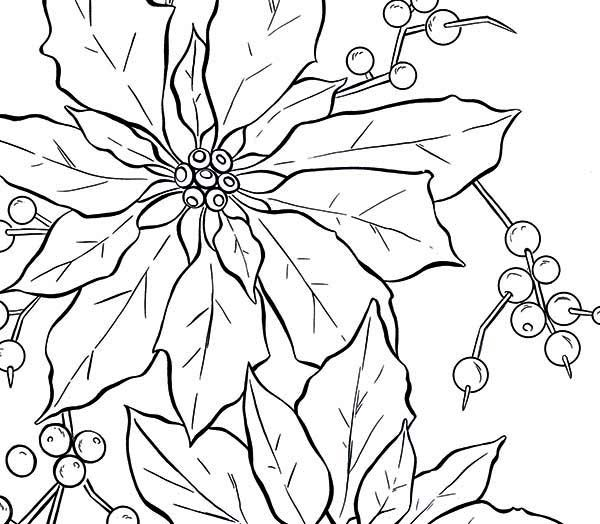 600x524 Poinsettia, Poinsettia Fruit Coloring Page Embroidery Patterns