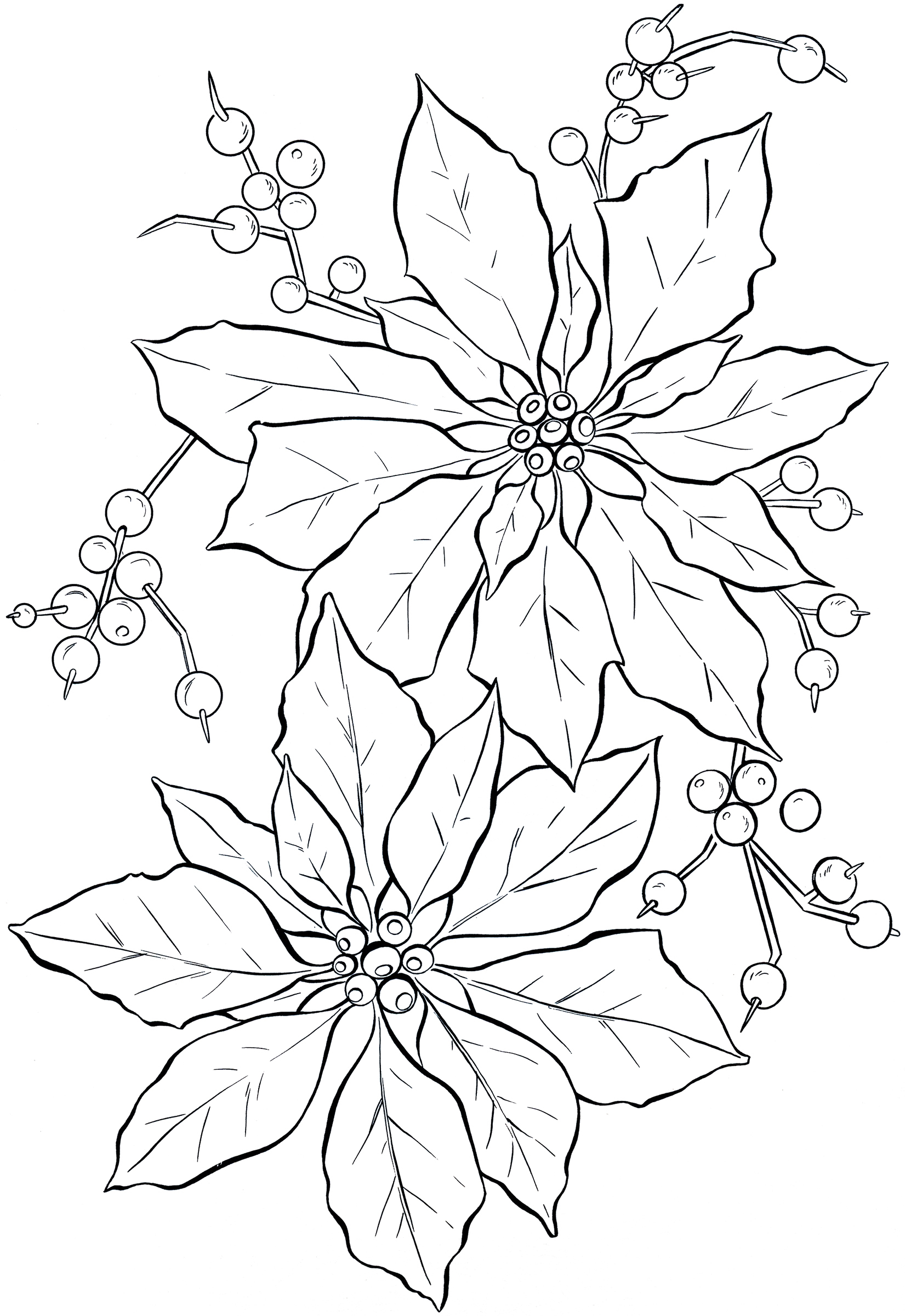 1651x2400 Poinsettia Coloring Page