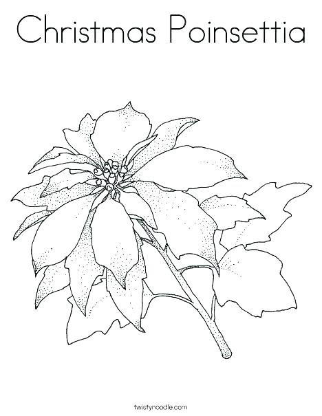 468x605 Poinsettia Coloring Page Blooming Poinsettia Coloring Page