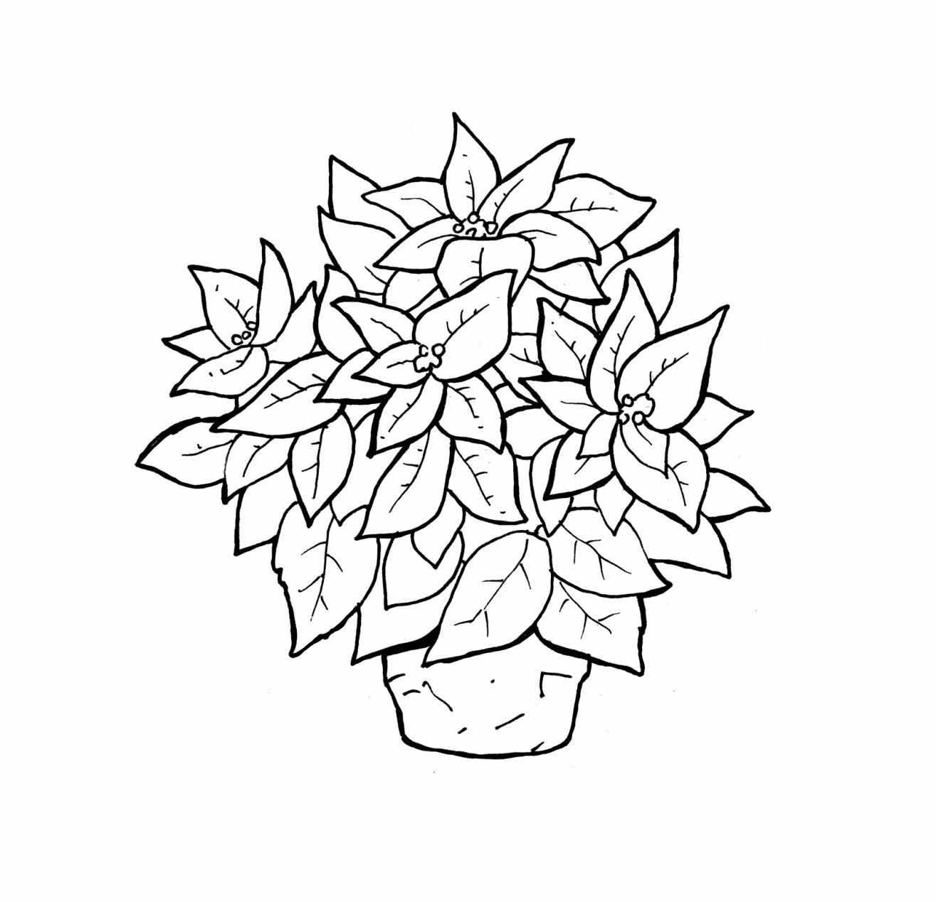 1315x1268 Poinsettia Coloring Pages Printable For Kids With Free Adult Free