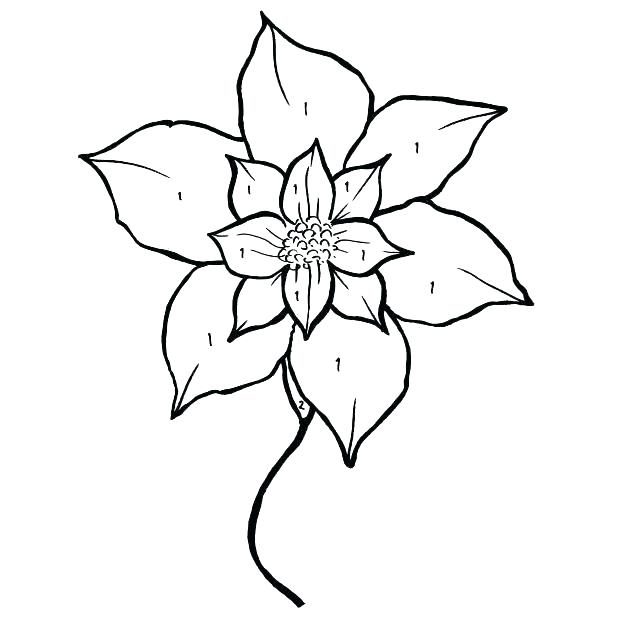 618x618 Poinsettia Coloring Sheet Simple Poinsettia Drawing For National