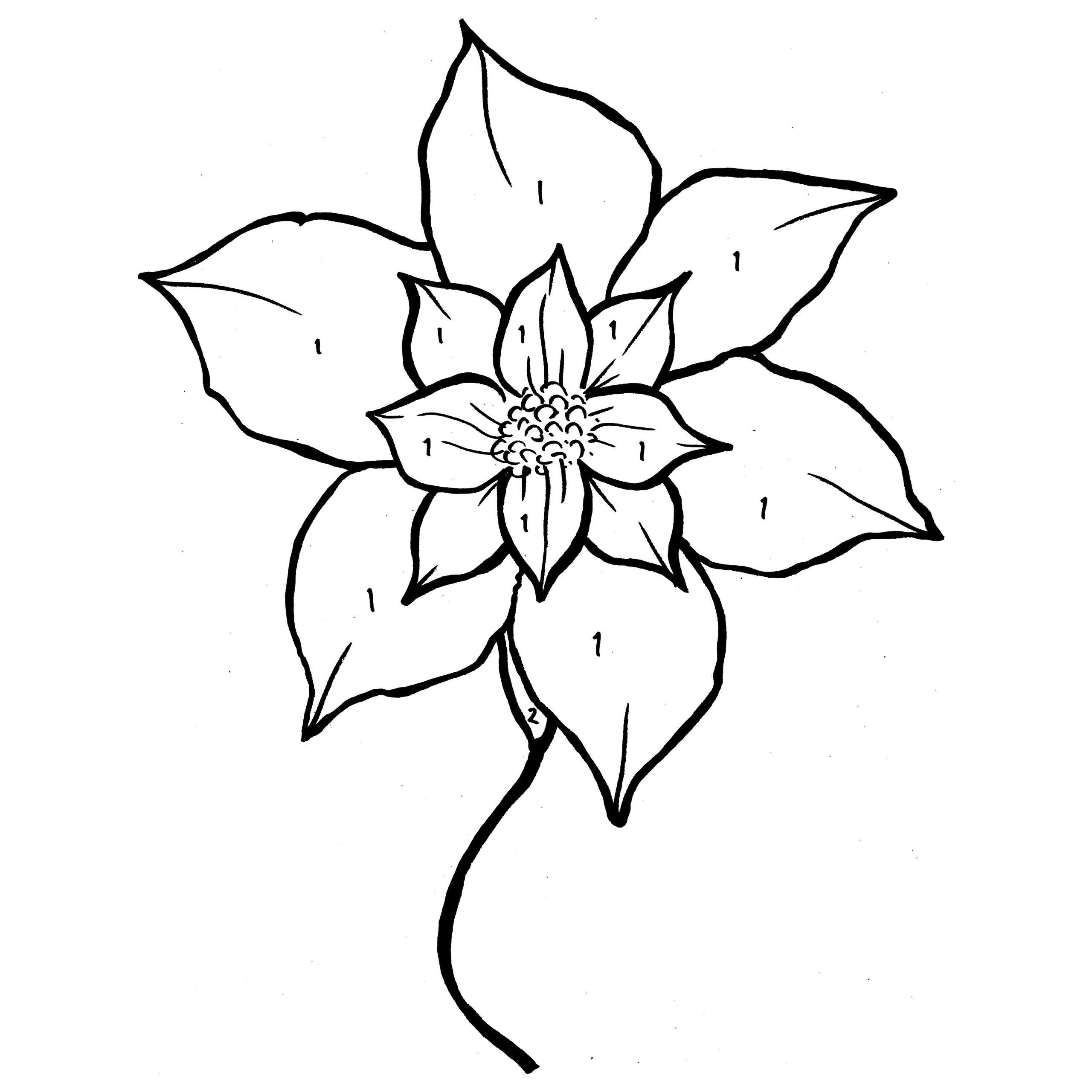 2560x2560 Poinsettia Or Christmas Flower Coloring Page Free Printable