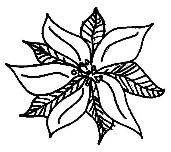 600x534 Pretty Poinsettia Picture Coloring Page Color Luna