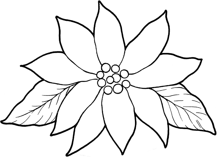 756x549 Poinsettia Coloring Pages For Kids On Colors