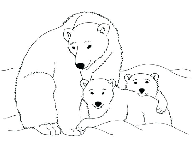 730x563 Bear Coloring Pages Free Printable Polar Throughout Prepare