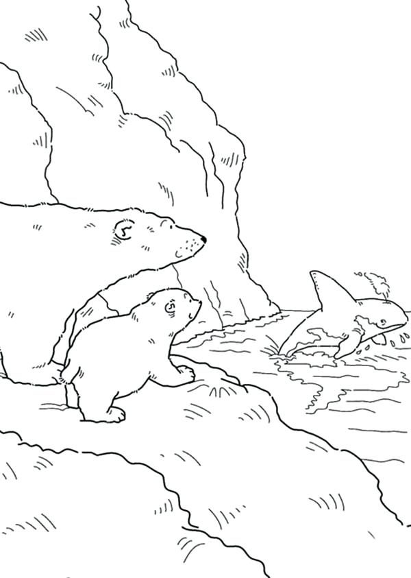 600x843 Polar Bear Coloring Pages
