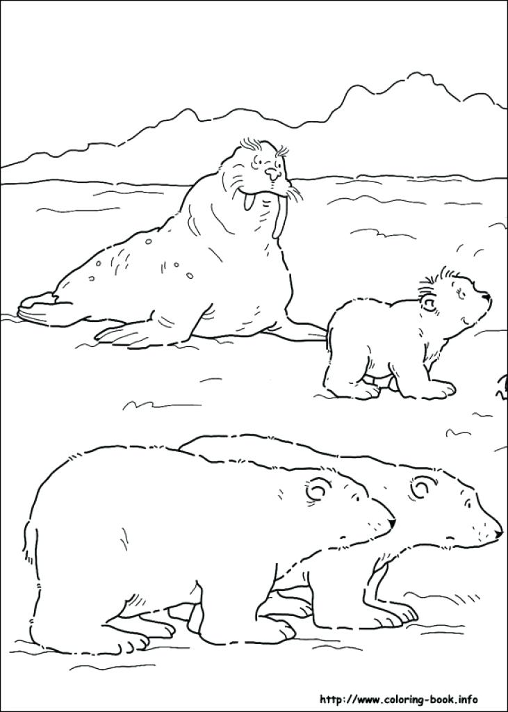 731x1024 Christmas Polar Bear Coloring Pages Sheet Winter Best Coloring