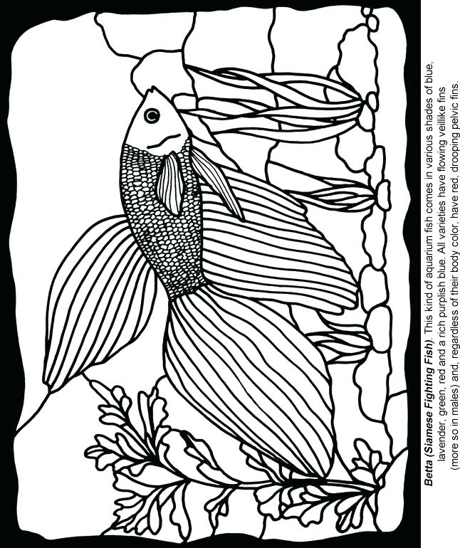 646x770 Stained Glass Coloring Page Fish Coloring Page Aquarium Fish
