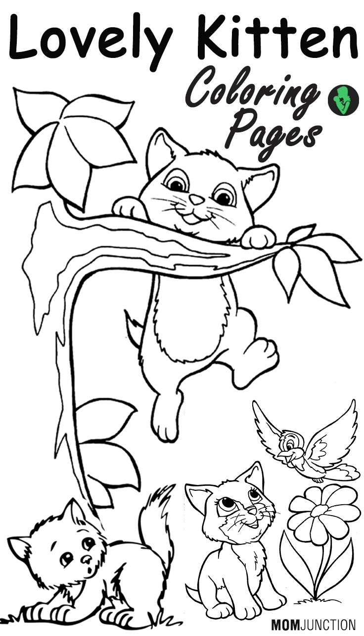 736x1284 Top Free Printable Kitten Coloring Pages Online Adult