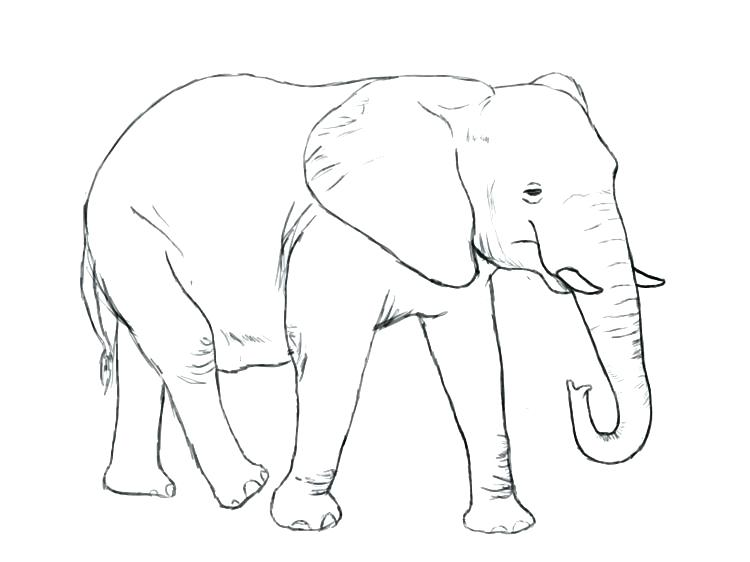 750x562 Circus Elephant Coloring Page Elephant Coloring Pages Pencil