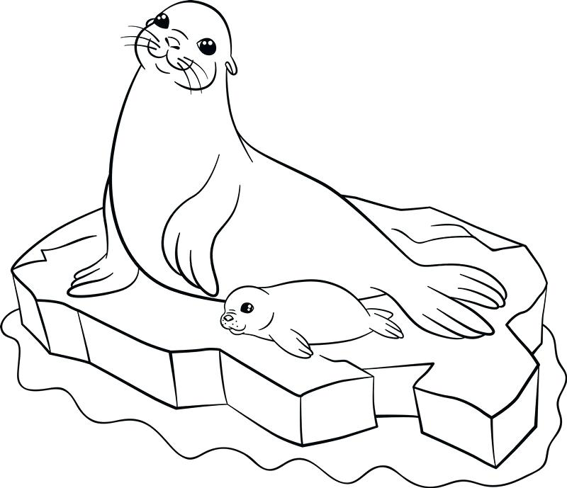 800x689 Baby Seal Coloring Pages Coloring Pages Mother Seal With Her