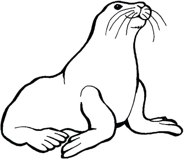 600x519 Seal Coloring Pages Seal Coloring Pages Preschool Kids Love Animal