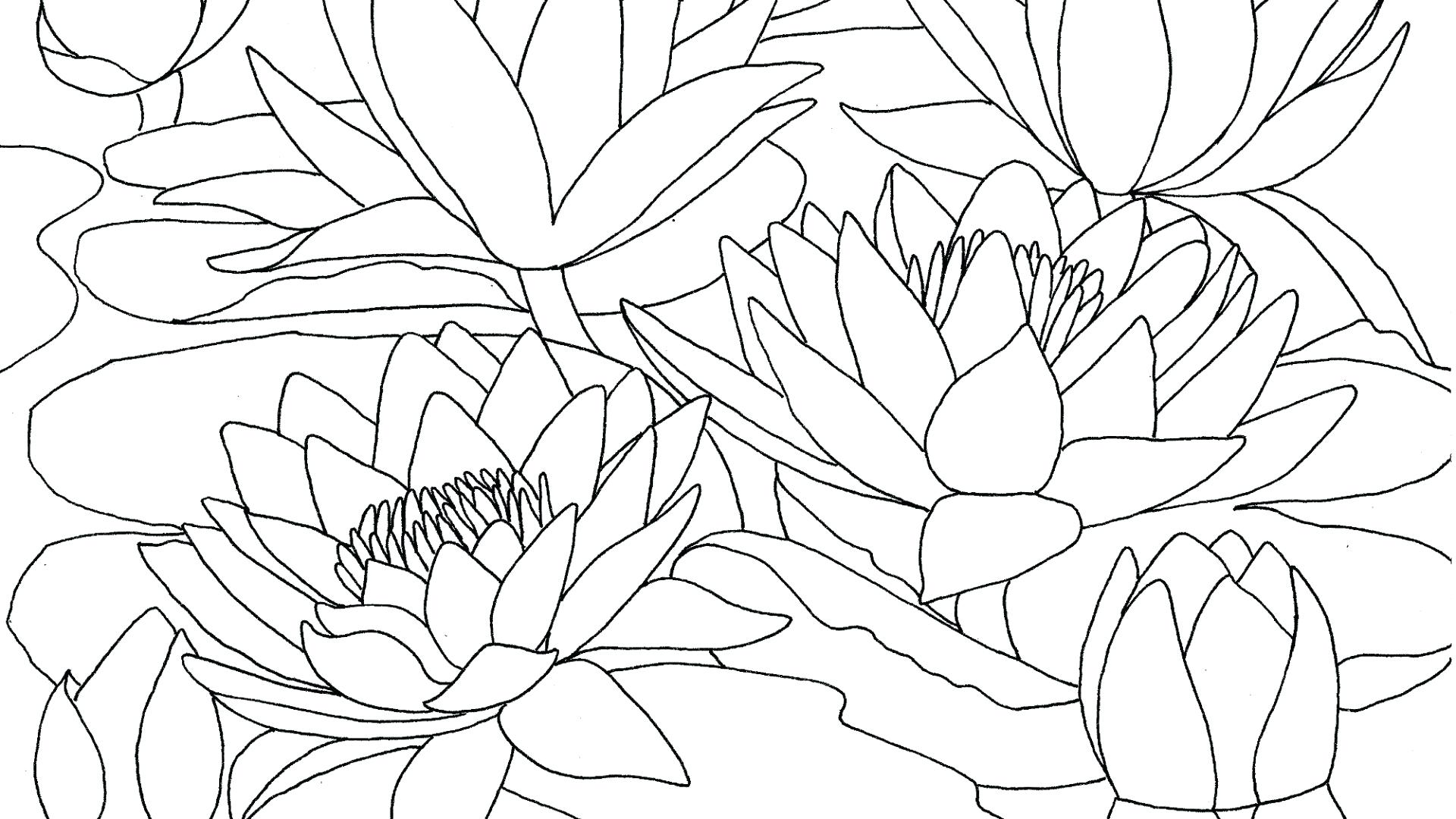 Claude Monet Coloring Pages at GetDrawings | Free download