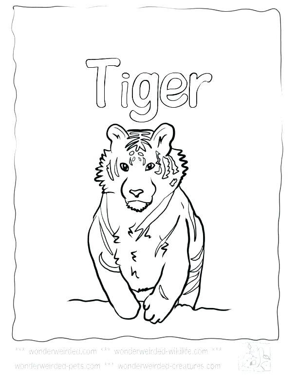 612x792 Tiger Color Page Tiger Tiger Coloring Page Free Printable Tiger