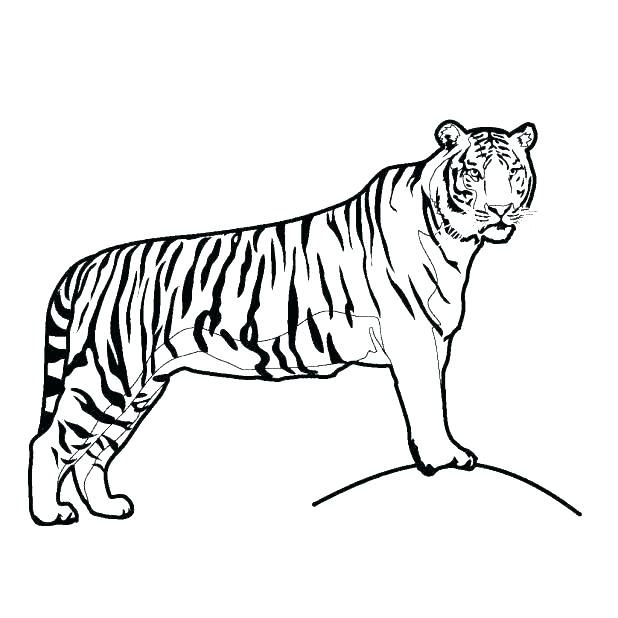618x618 Tiger Picture To Color Clemson Tiger Paw Coloring Page Tiger Color