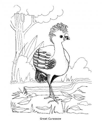 400x513 Great Curassow Coloring Page Rainforest Alliance