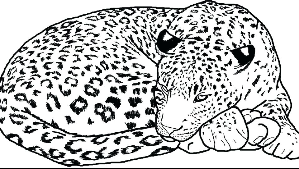 960x544 Snow Leopard Coloring Pages Leopard Coloring Page Free Printable