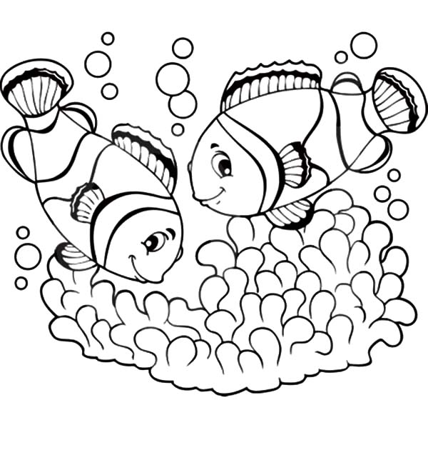 600x630 Clown Fish Couple Mating Coloring Pages Best Place To Color