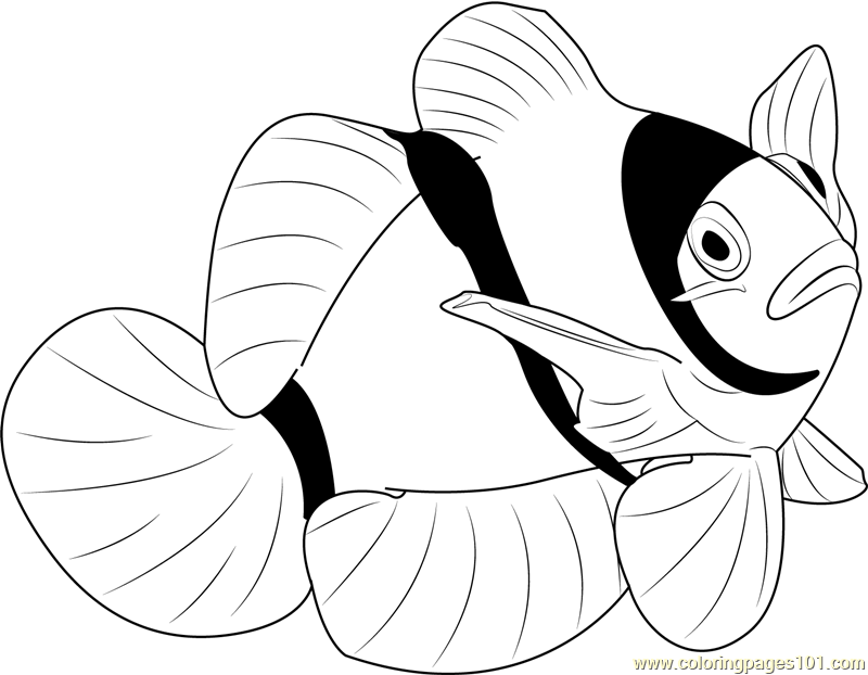 800x622 Clown Water Fish Coloring Page